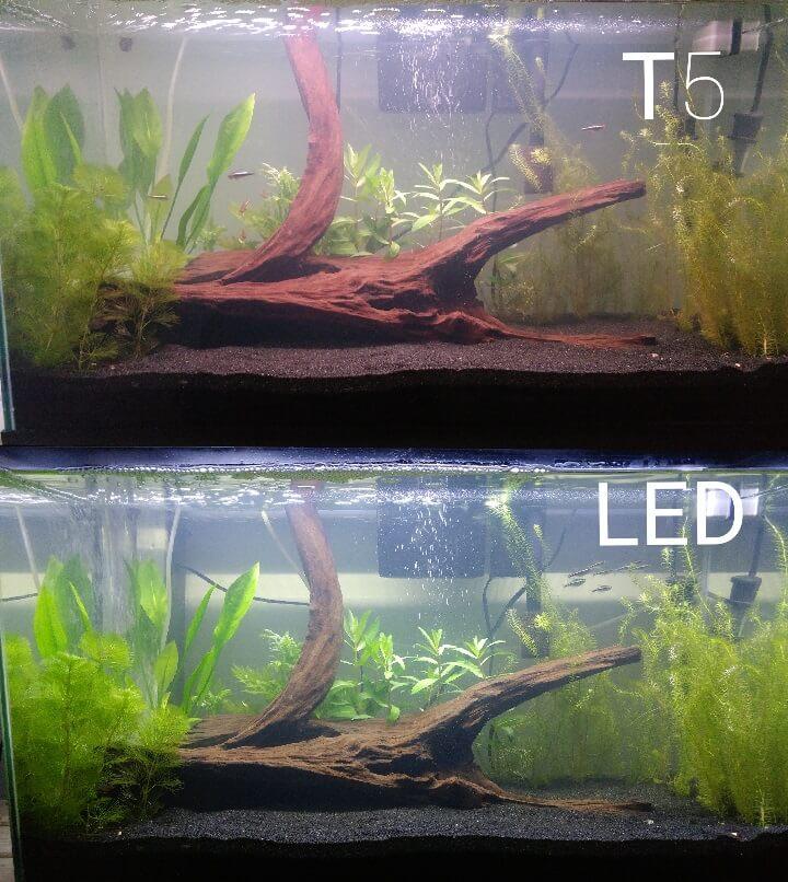 T5 LED Light vs. T5 Fluorescent Light