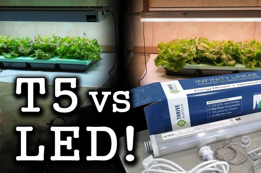 T5 vs. LED